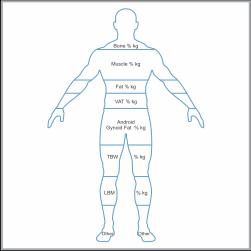 body-composition-icon